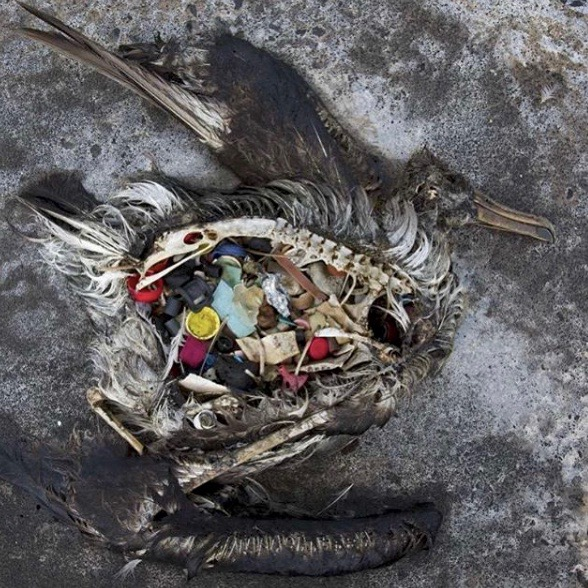 Birds die because of plastic - one reason why we should start to live a sustainable lifestyle