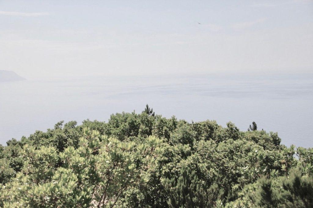 verschiedene Bäume, die in den Himmel übergehen, zeigen hejhej-mats Einfluss durch neue gepflanzte Bäume