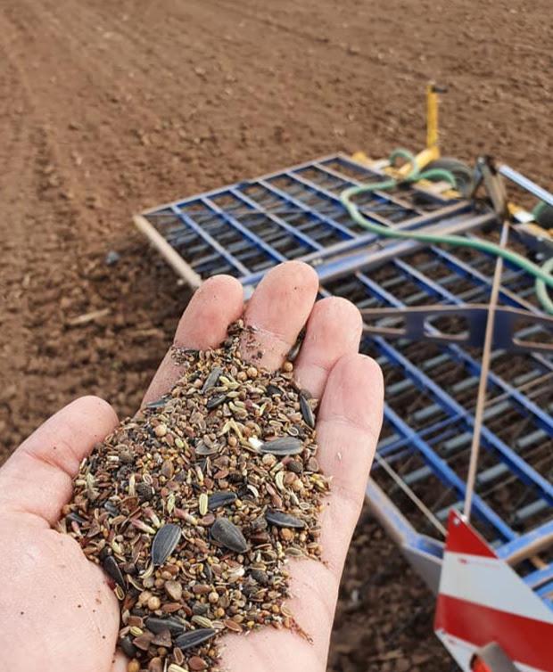 Hand mit Samen für die Blühwiesen